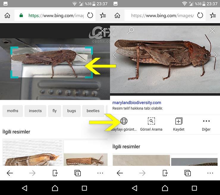 Çektiğiniz Resmi Bilmiyorsanız Bing Görsel'de Arayın